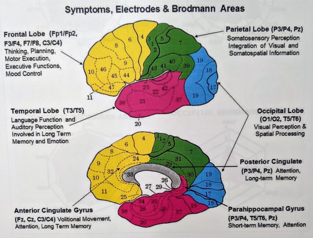 Parts of the Brain and What They Do | Beacon of Hope